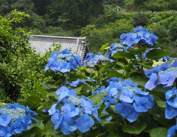 【大多喜】まさに秘境!これから見頃の千葉の紫陽花の名所!麻綿原ブルーを堪能しよう♪