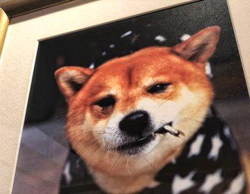 香港旅♡『柴犬ギャラリーカフェ』香港おすすめランチ・インスタ映えカフェ