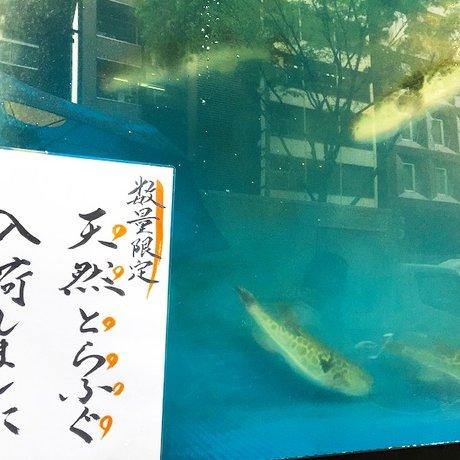 とらふぐ亭 渋谷店