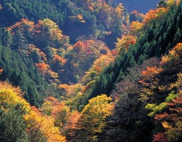 奥多摩ドライブ 大自然を心ゆくまで堪能する【奥多摩湖、丹三郎、日原鍾乳洞、もえぎの湯、紅葉】