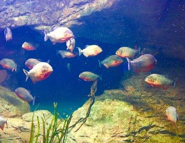 【マルタの中心からブジッバのセント・ポールズ湾へ】マルタナショナルアクアリウムで楽しむ水族館観光