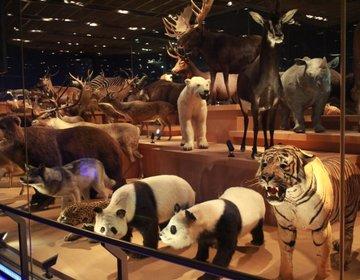 【 動物好き必見!】上野 デート&子連れおでかけプラン 上野動物園、国立科学博物館の歩き方[保存版]