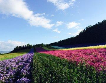 夏の北海道ベストスポット 富良野・美瑛、青い池とラベンダー