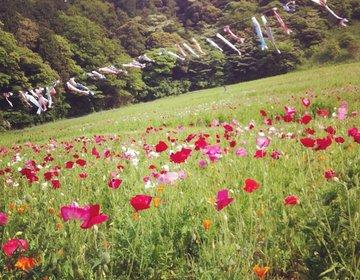 【三浦半島で自然を感じるドライブデート】秋・冬にこそおすすめ海テラスカフェ、お花畑、絶品スープカレー