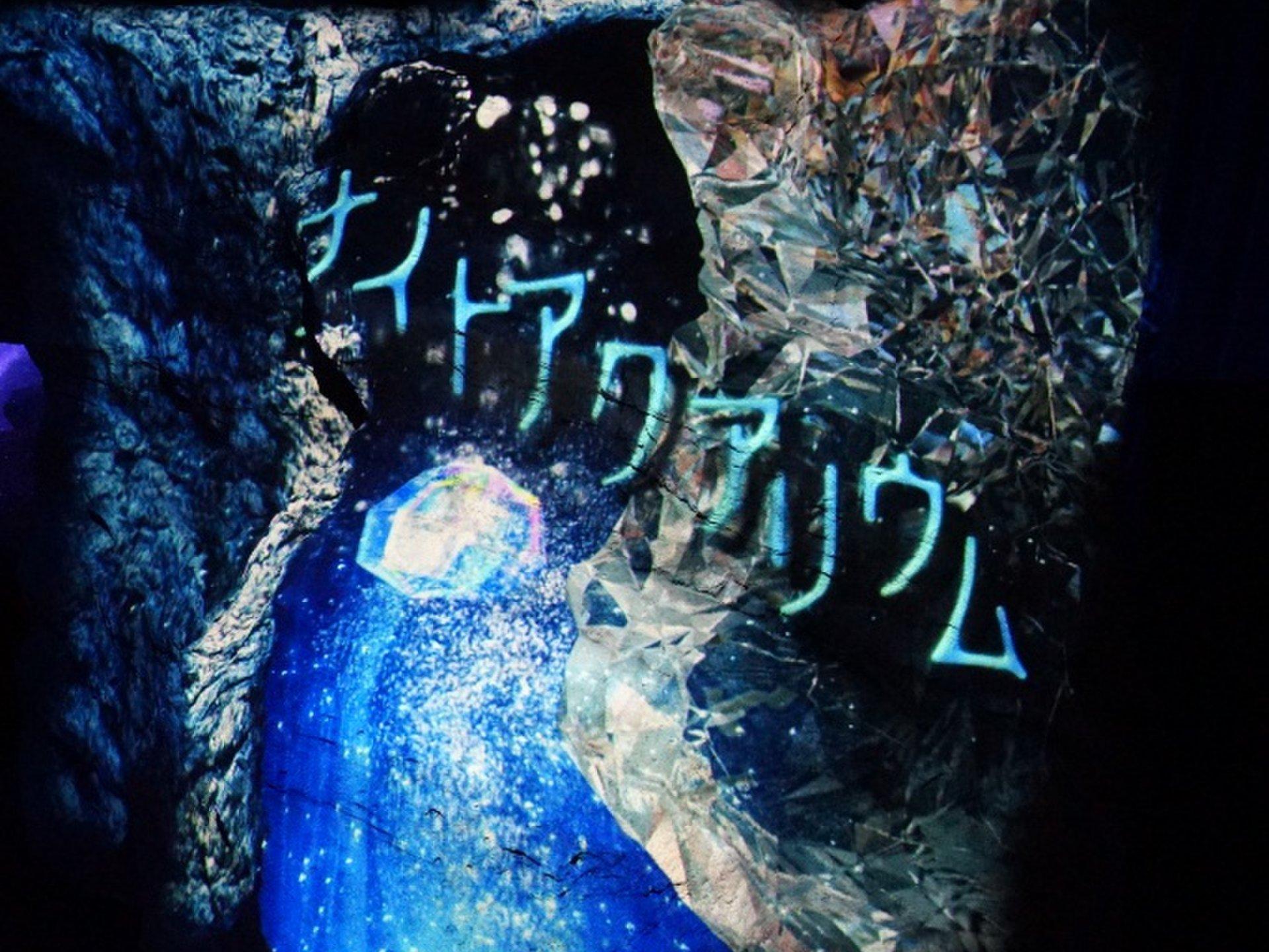 湘南デートはえのすいの「ナイトアクアリウム」が雰囲気バツグン!いつもとは違いロマンチック!!
