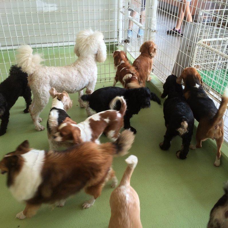 世界の名犬牧場