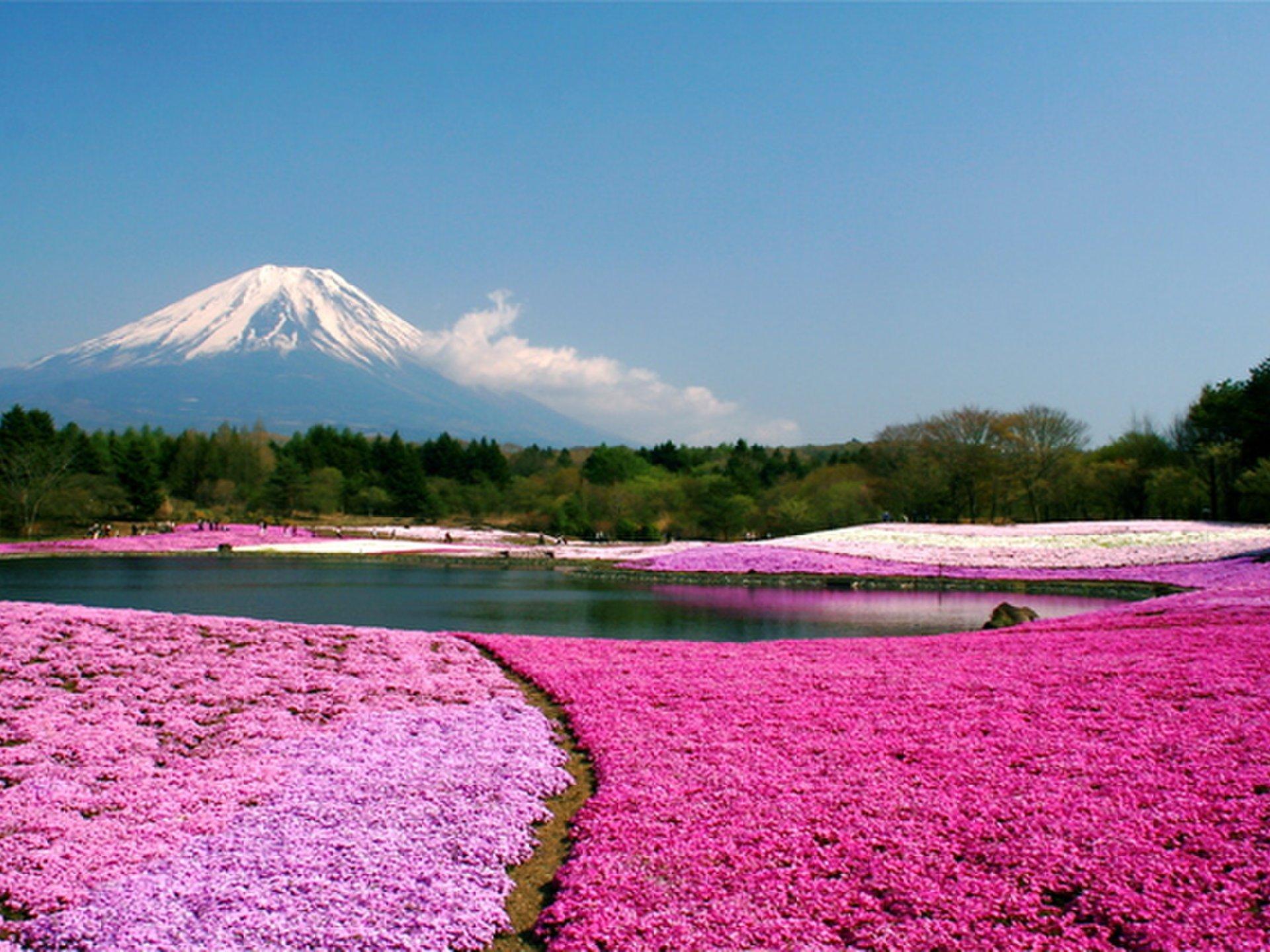 富士山付近と河口湖周辺の観光スポットをドライブ♪カップルにおすすめ秋・冬デートプラン♡