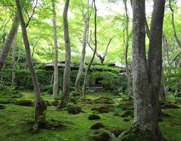 京都・嵐山 日本の美と無常に触れ、湯豆腐を食す、自転車の旅!【清凉寺、化野念佛寺、祇王寺、常寂光寺】