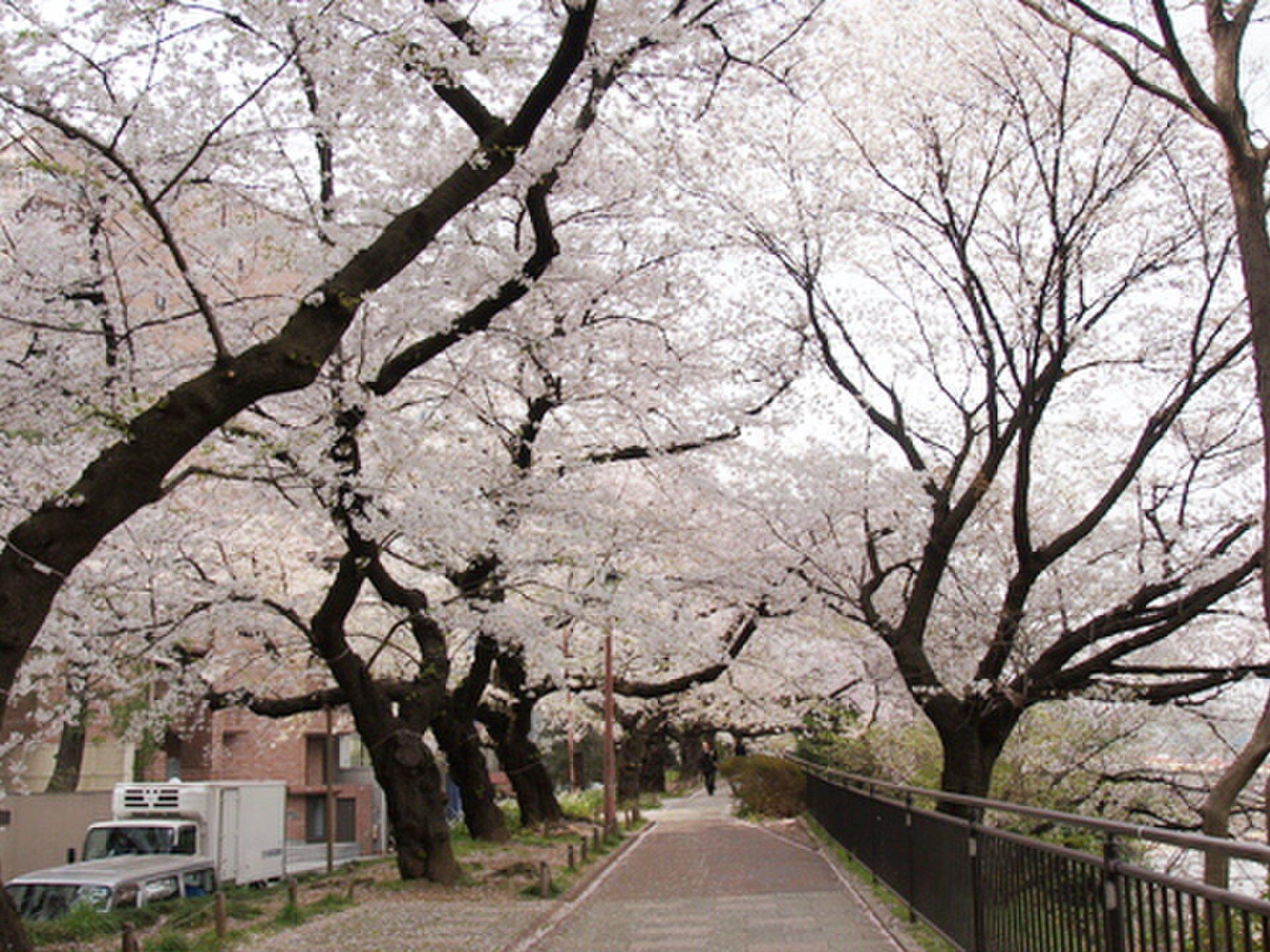 [東京首都圈學生關注]早稻田慶應義塾上,大遊行學生中流行的特色美食