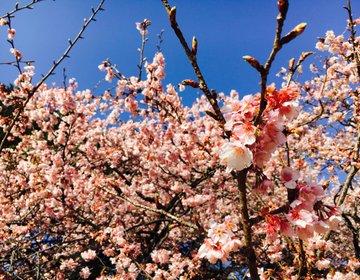 【一足先に、新宿で春。】満開の梅が非日常の癒しを与えてくれる、都会のオアシス『新宿御苑』