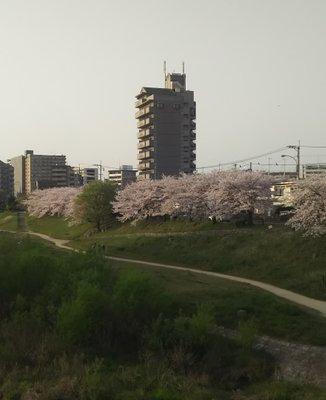 第37号那珂川河川緑地
