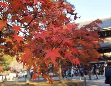 京都の南禅寺で紅葉観光!美味しい京都料理もいただきました
