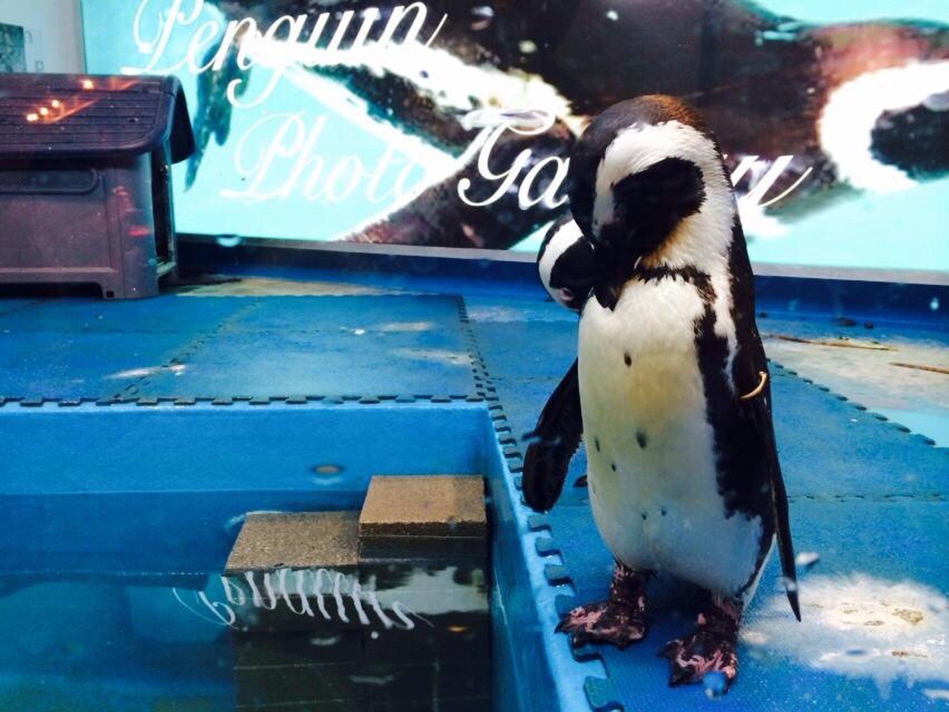池袋で女子会ならおしゃれ雰囲気抜群の『ペンギンのいるBAR』がおすすめ!