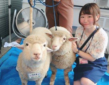 渋谷周辺で牧場体験ができる♡まったり動物とふれあいプラン。デートにも◎