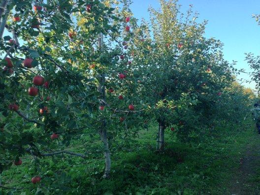 山本観光果樹園
