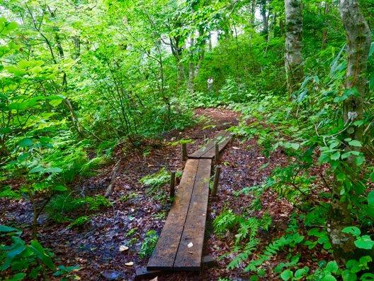 白神山地 ブナ林散策コース