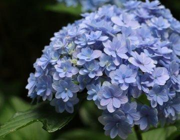 【千葉・成田】関東近郊!穴場の紫陽花の名所!千葉県多古町にある「日本寺」日蓮宗の古刹です。