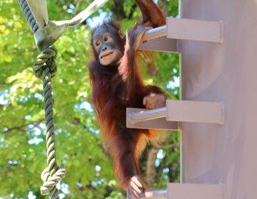 【旭山動物園】動物のかわいさがダイレクトに伝わる♡元祖 行動展示のセンスは今も見応えあり♪