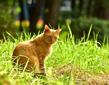 【猫好きさん必見!】遭遇率100%  東京で最も猫の多い公園 in大井ふ頭中央海浜公園