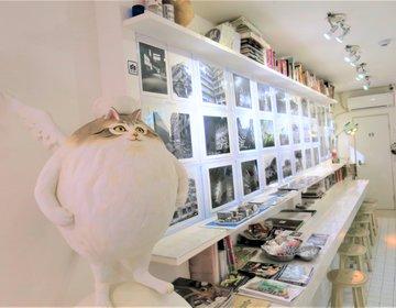 非日常カフェで療養⁉︎福岡天神の不思議博物館分室「サナトリウム」の独特な世界観を体感!