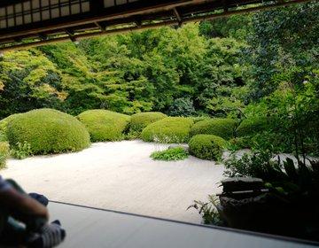 京都詩仙堂。ししおどしの響く庭園と隠れ家カフェ「セイカツノガラ」