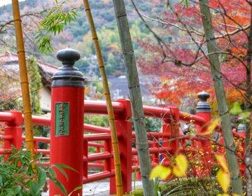 温泉旅行!伊豆・修善寺お勧め観光♡インスタ映え竹林の小径・独鈷の湯など