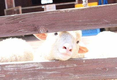 らくのうマザーズ阿蘇ミルク牧場