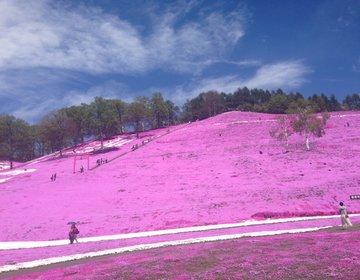 【大空町】ピンクの絶景!「ひがしもこと芝桜公園」で癒される♪ランチは川湯温泉駅前のオシャレカフェ☆