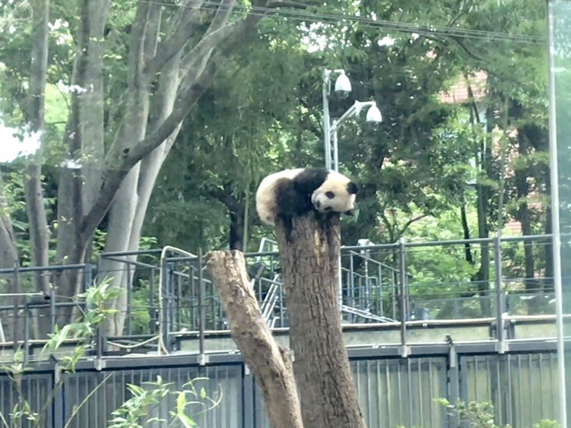 上野公園完璧ガイド!上野エリア最新おすすめグルメ&観光スポット23選