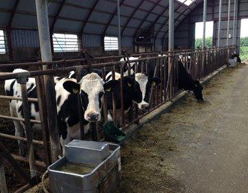 【道東】牧場で牛の乳搾り&牧草地をトラクターで周遊体験☆ランチは屈斜路湖近くのナチュラルフレンチ♪