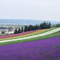 【旅行で行きたい日本各地のフラワーパーク!】古今東西日本全国にある美しいお花畑を一挙大公開!