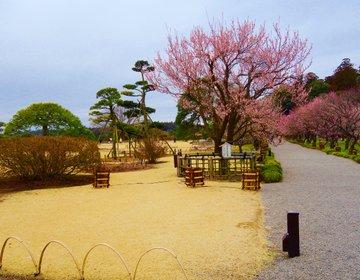 日本三大庭園を行く水戸・梅まつり、偕楽園や子連れOKランチ・スイーツ日帰りおでかけプラン