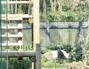 【昼からの上野動物園】パンダも見れるしランチもできる上野動物園でゆっくりデートはいかが?