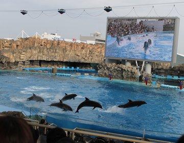 【名古屋でデート】初デートは世界の海の生き物がいっぱいの名古屋港水族館で恋が実る♡