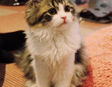 【猫好き必見!】かわいい猫ちゃんにときめく♡癒しのデートプラン【大宮 猫カフェ】