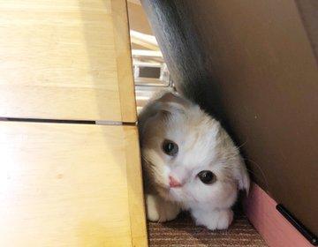子猫に会える確率が高い♡『猫家』意外と穴場おすすめ猫カフェへ