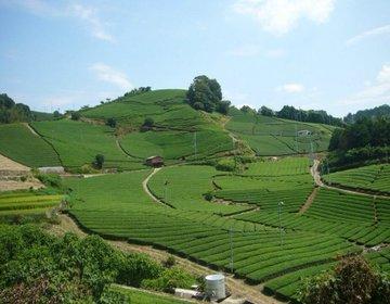 【日本遺産にも登録】日本茶800年の歴史散歩。京都府の茶の郷和束町を訪れ茶畑を楽しむ。