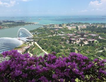 シンガポール〜世界遺産『ナショナルオーキッドガーデン』大人気観光地で植物鑑賞