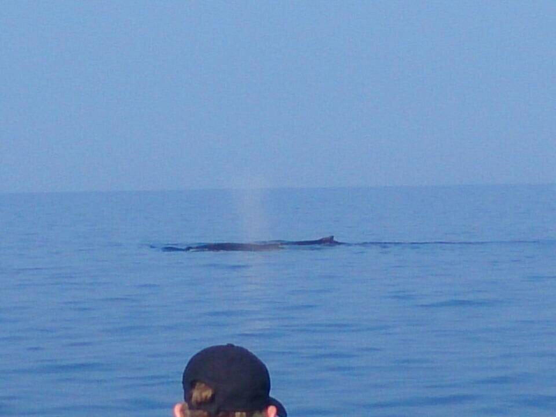 ハワイ島で観光するなら必見!クジラが次々現れる、ハワイ島でおすすめホエールウォッチング!
