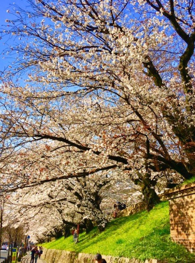 琵琶湖疏水ねじりまんぼ