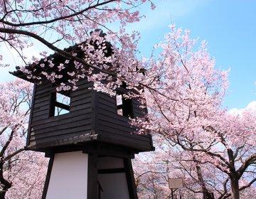 長野県・伊那市 天下第一の桜を目指し、春のドライブへ!【高遠城址公園、青い塔、分杭峠、勝間薬師堂】