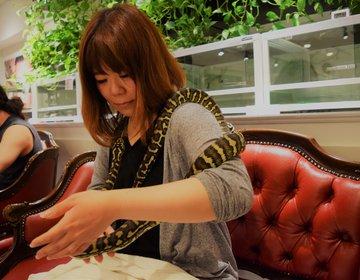 ヘビ専門の動物カフェ⁉原宿「東京スネークセンター」に潜入