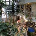 渋谷区 ふれあい植物センター