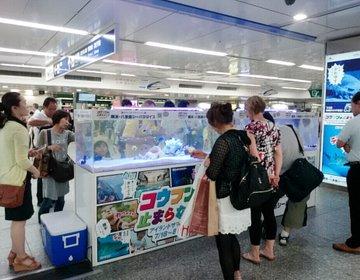 横浜駅に水槽が出現!?新待ち合わせスポットはここ!→ みなとみらい夜景デートへ☆