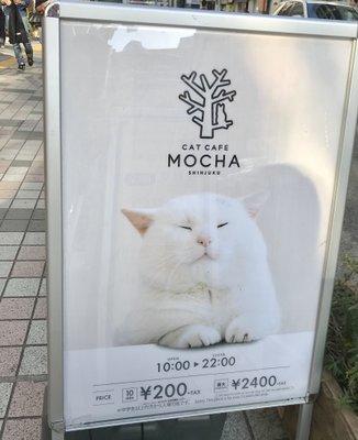 猫カフェMoCHA 新宿店