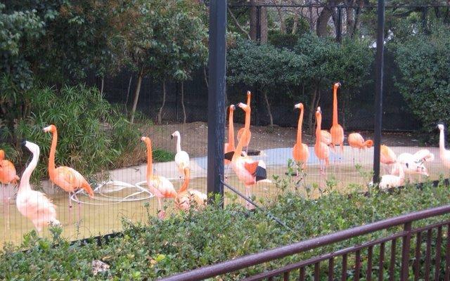 天王寺動物園 (Tennoji Zoo)