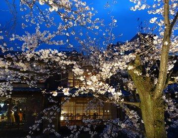 ドキドキするほど艶やかで美しい~!!「祇園白川宵桜ライトアップ」
