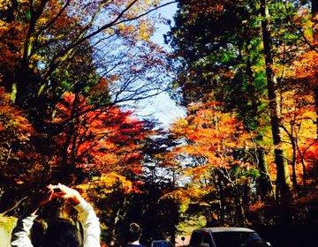 【紅葉×イルミネーション】デートにもピッタリな栃木県を満喫する最強ドライブプラン。