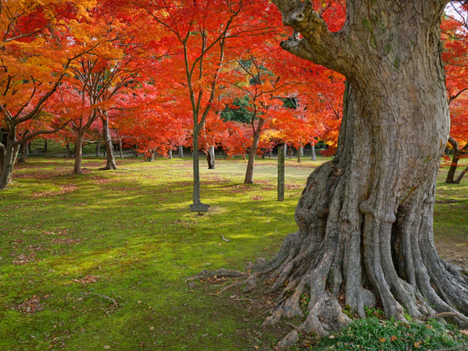 【日本三大名園って知ってる?】四季折々が美しい、日本が誇る最高の日本庭園をご紹介!