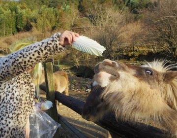 高知の岡崎牧場で餌やりをして牧場スイーツを食べて温泉に入るプラン。